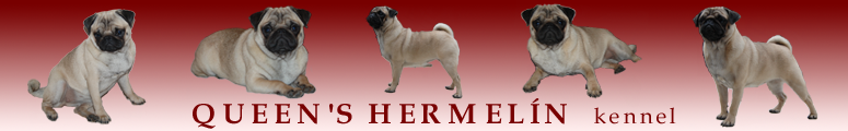 QUEEN´S HERMELÍN - pug and basset hound kennel
