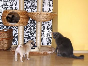 Benedikt a kočky